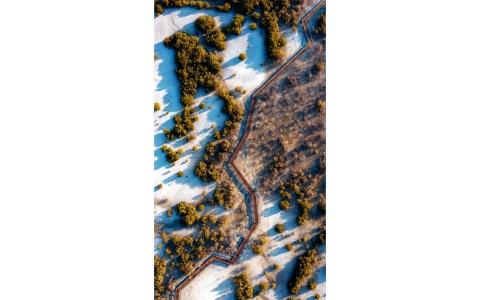 الصورة: الصورة: جزيرة الجبيل.. موطن أشجار القرم