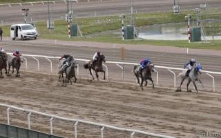 الصورة: الصورة: 10 خيول تتنافس على كأس رئيس الدولة للخيول العربية في السويد اليوم