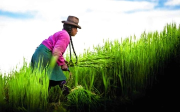 الصورة: الصورة: إكسبو 2020 دبي ينظم أسبوع المناخ والتنوع الحيوي