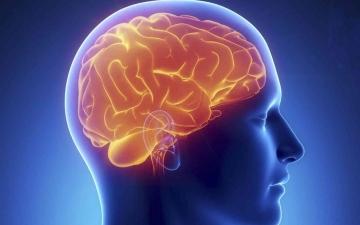 الصورة: الصورة: هذا ما تفعله الأطعمة المصنَّعة في الدماغ