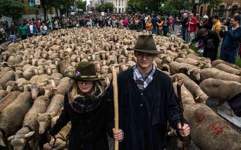 الصورة: الصورة: الأغنام تحل محل السيارات في شوارع العاصمة الإسبانية