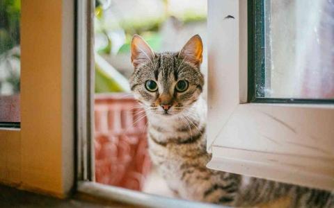 الصورة: الصورة: 200 ألف هرّ.. واشنطن أول مدينة في العالم تحصي قططها