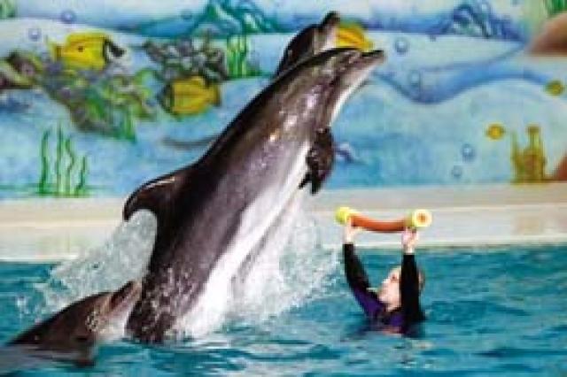 عروض الدلافين تسحر الأطفال في حديقة الخور ديارنا البيان