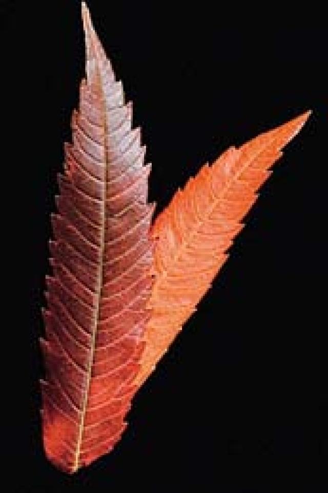 علاجات طبيعية للهبات الساخنة مسارات البيان